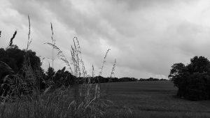 webagentur-mw-home - das Bild zeigt im Wind wehende Gräser vor einem Wiesenhügel mit bewölktem Himmel